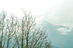 Trädöverkant i dold och dimmig bergbakgrund för vintersnö Molnigt himalayan område och med dess reflexion bakgrunden royaltyfri foto