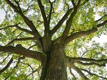 Trädöverkant i skog Arkivfoto