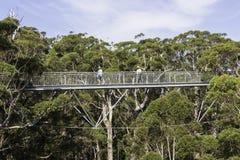 Trädöverkanten går Fotografering för Bildbyråer