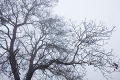 Trädöverkantfilialer Royaltyfri Fotografi