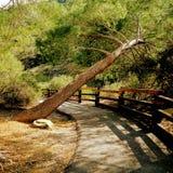 Träd över en bana Arkivfoto