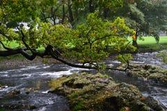 Träd över floden Arkivbild