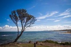 Träd över havet med landskap på Melbourne Arkivbilder
