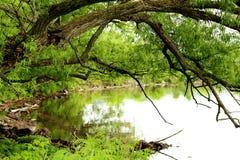 Träd över sjön i vår arkivfoto