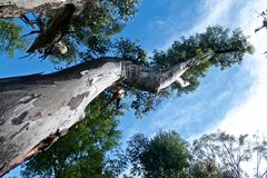 Träd över skyen Arkivbilder