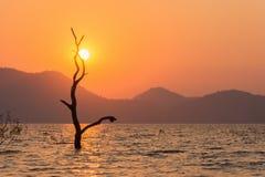 Träd över solnedgång i sommar Royaltyfria Bilder