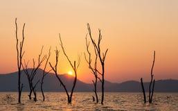 Träd över solnedgång i sommar Arkivbilder