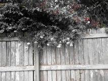 Träd över staketet Royaltyfri Fotografi