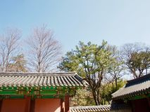 Träd över taket av en japansk buddistzentempel royaltyfria bilder