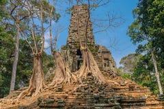 Träd över templet i Angkor arkivbilder