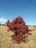 Träd Arkivfoto
