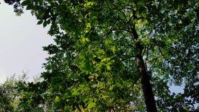 Träd Arkivbilder