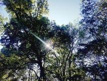 Träd royaltyfria bilder