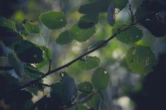 Träd royaltyfri bild
