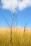 Träd. Fotografering för Bildbyråer