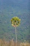 Träd. Royaltyfri Fotografi