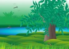 Träd. Arkivbilder