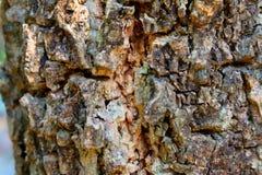 Träd Fotografering för Bildbyråer