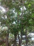 Träd Arkivfoton
