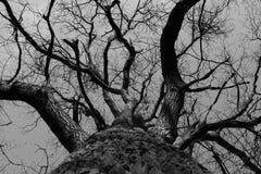 Träd Arkivbild