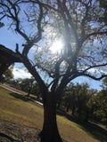 Träd Royaltyfri Fotografi