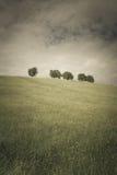 Träd 108 Arkivbilder
