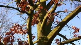 Träd stock video