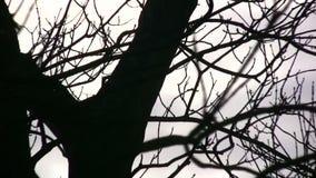 Träd arkivfilmer