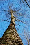 Träd Royaltyfria Foton