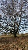 Träd Royaltyfri Foto