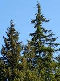 Träd 2017 arkivfoto