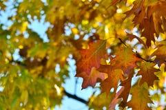 Träd autumfärger, lövverk royaltyfri fotografi