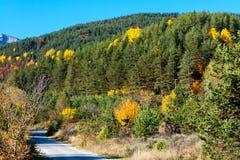 Träd Autumn Colors, gräsplan, guling som är röd på Arkivfoto
