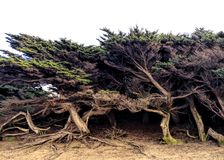 Träd av Royaltyfri Foto
