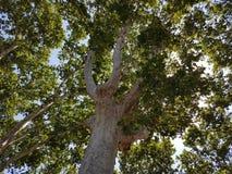 Träd av bra skugga Royaltyfria Foton
