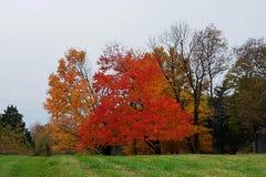 Träd av brand arkivfoton