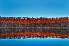 Träd av brand Arkivfoto