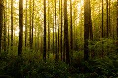Träd av en Oregon skog Royaltyfri Bild