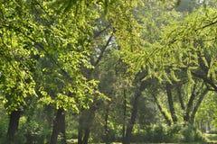 Träd av ett gammalt parkerar Arkivbild