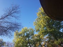 Träd av gräsplan i natur Arkivfoton