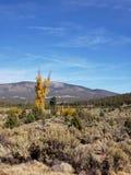 Träd av guld fotografering för bildbyråer
