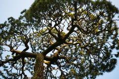 Träd av komplikation Fotografering för Bildbyråer