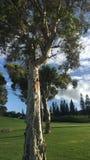Träd av liv Arkivfoton