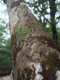 Träd av liv med slug mossa fotografering för bildbyråer