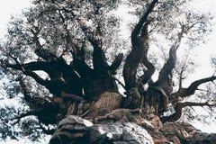 Träd av liv på den Disney djurriketen Arkivbild
