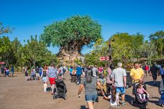 Träd av liv på djurriketen på Walt Disney World Royaltyfri Foto