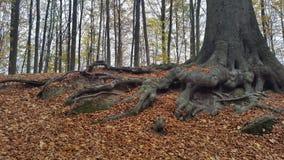 Träd av livet Royaltyfri Foto