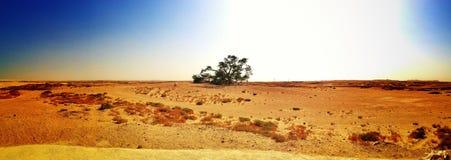Träd av livpanorama Arkivfoto