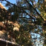 Träd av Mardi Gras halsband royaltyfria bilder