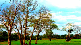 Träd av naturen Arkivbilder